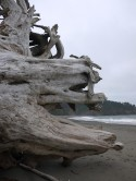Petrified Tree, Quileute Resort